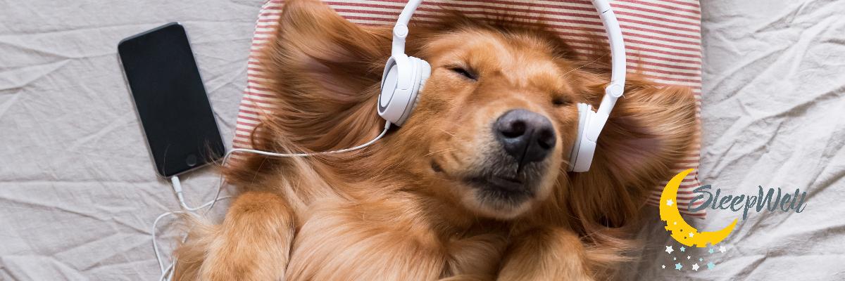 Sleeping Dog, music and sleep