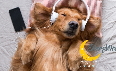 dog asleep, napping dog, music lover