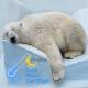 bear sleeping cool