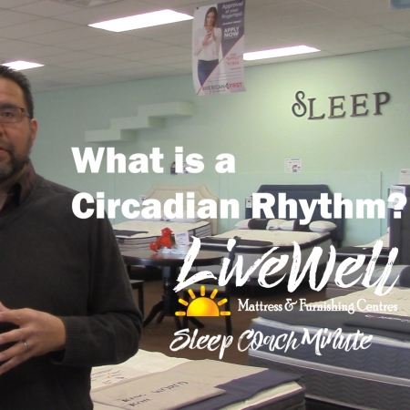 What is a circadian rhythm?
